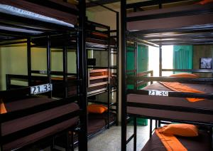 Bunk Bed in Mixed Dormitory Room Hostel Yaxha