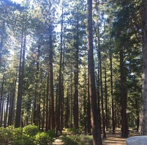 Club Tahoe Resort, Resorts  Incline Village - big - 14