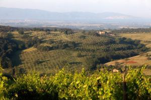 Casale Sterpeti, Panziók  Magliano in Toscana - big - 37