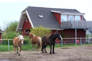 Urlaub auf dem Bauernhof - Arbshagen