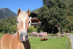 Accommodation in Obervellach