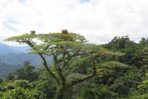 Berghütte in grandioser Naturkulisse, Tapantí