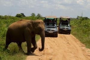Mahoora Tented Safari Camp All-Inclusive - Udawalawe, Кемпинги  Удавалаве - big - 23