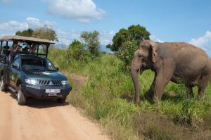 Mahoora Tented Safari Camp All-Inclusive - Udawalawe, Кемпинги  Удавалаве - big - 21