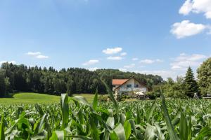 Alfreds Ferienbauernhof - Kißlegg