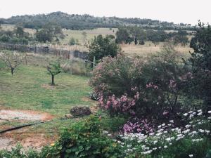 Rocky Ridge Retreat, Bauernhöfe  Mudgee - big - 20