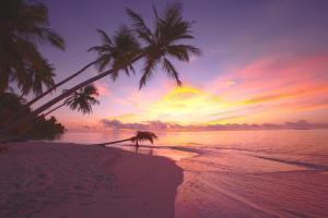 Filitheyo Island Resort (36 of 175)
