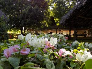Echo Villas Watamu, Chaty v prírode - Watamu