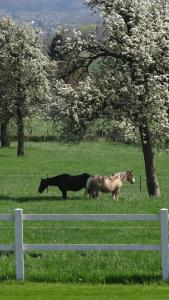 Hoeve Espewey, Farmy  Hombourg - big - 28
