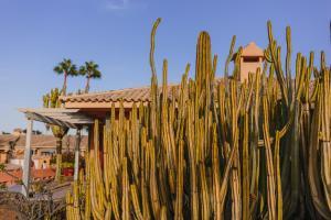 Dunas Suites & Villas Resort (34 of 62)