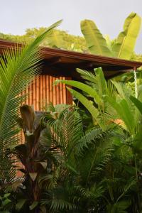 Casas de Agua, Apartmánové hotely  Pláž Santa Teresa - big - 11