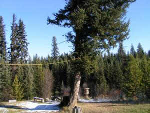 Seawood Bed&Breakfast&Cabins - Accommodation - Bridge Lake