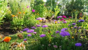 obrázek - Blooming Delight Tauranga