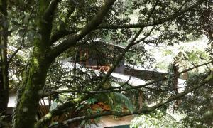 King Fern Cottage, Lodges  Nuwara Eliya - big - 53