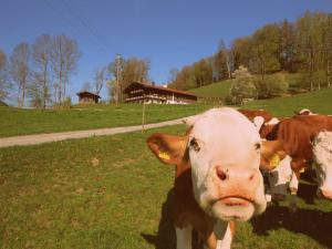 Gmaiserhof _ alleinstehendes Ferie - Bayrischzell
