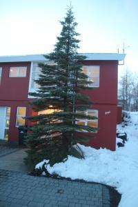 obrázek - Happy Place Akureyri