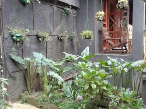 King Fern Cottage, Turistaházak  Nuwara Eliya - big - 31