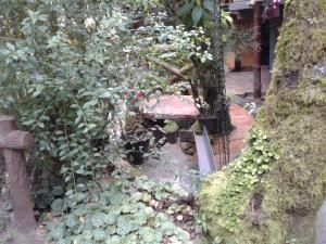King Fern Cottage, Lodges  Nuwara Eliya - big - 32
