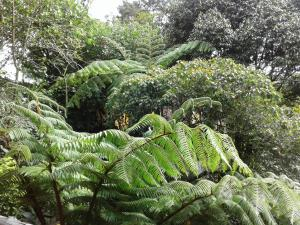 King Fern Cottage, Lodges  Nuwara Eliya - big - 26