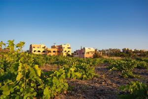 Alisaxni Resort, Aparthotels  Akrotiri - big - 126
