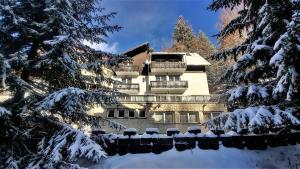 TreeZ Hostel