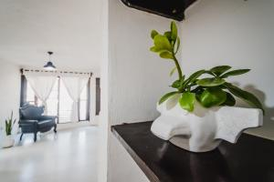 Residencia Gorila, Apartmanhotelek  Tulum - big - 136
