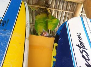 Soleadas Homes, Chaty v prírode  Pláž Santa Teresa - big - 22