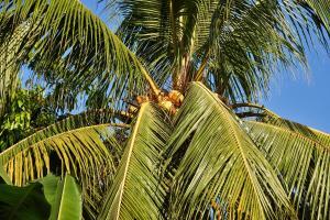 Soleadas Homes, Chaty v prírode  Pláž Santa Teresa - big - 27