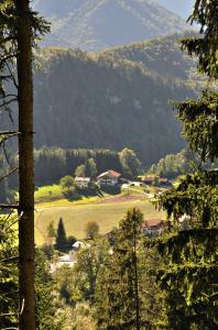 Greinhof - Bayrischzell