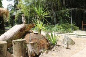 Jamala Wildlife Lodge (14 of 74)