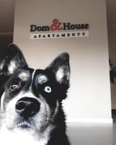 Dom House Apartments Waterlane Island