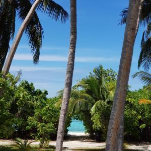 Ostelli e Alberghi - Vaali Beach Lodge Maldives