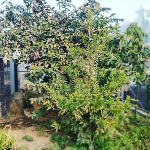Karwaan BnB, Priváty  Gurugram - big - 19
