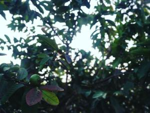 Karwaan BnB, Priváty  Gurugram - big - 10
