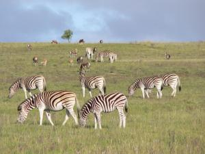 Lalibela Game Reserve (33 of 184)