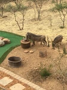 Windhoek Rural Self Catering, Priváty  Voigtland - big - 3