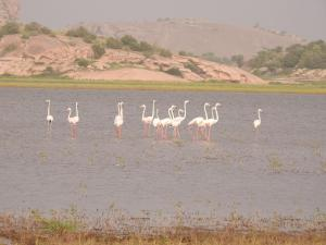 Aravali Nature Camp - Jawai