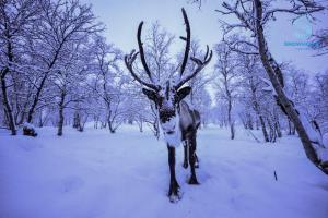 Kirkenes Snowhotel (21 of 102)