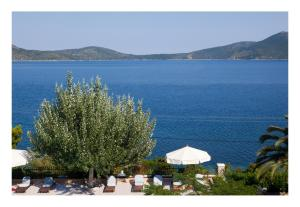 Alonissos beach villa 5 steps away from the sea Alonissos Greece