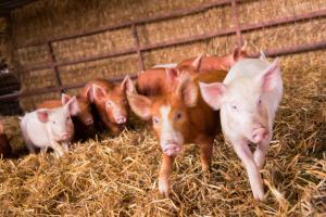 Huntlands Farm Bed & Breakfast (27 of 28)