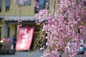 Auberges de jeunesse - Shizukatei