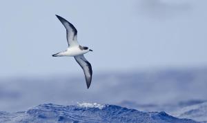 obrázek - The Free Bird-Private Villa