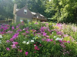 . Contented Cottage Bed and Breakfast