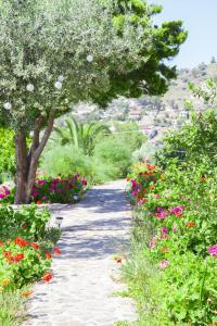 Aelia Villa Aegina Greece