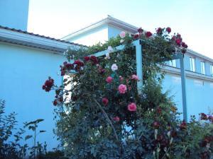 Guest House V dolinie roz