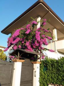 La Bouganville di Sante e Rosa - AbcAlberghi.com