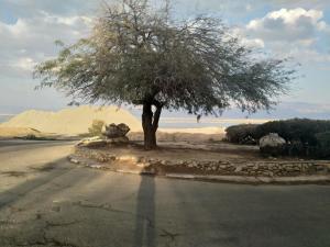 Carmit's Dead Sea Place - Ne'ot HaKikar