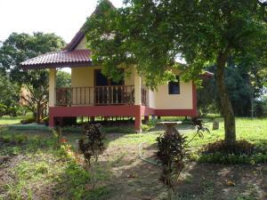 Suancha Tea Garden - Ban Rong Khi Noi