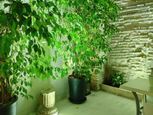 Apartamentos Córdoba Atrium, Apartmány  Córdoba - big - 18