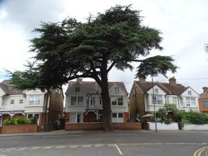 Auberges de jeunesse - Cedar Tree Guest House